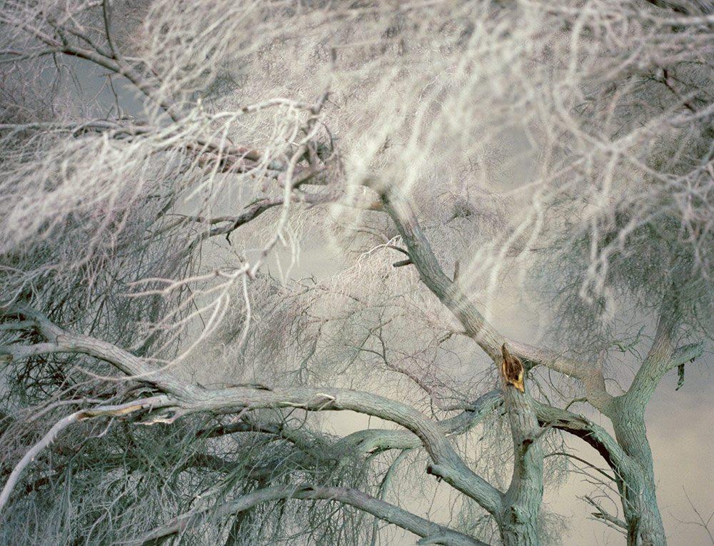 Life-Framer-Olivia-Arthur-7